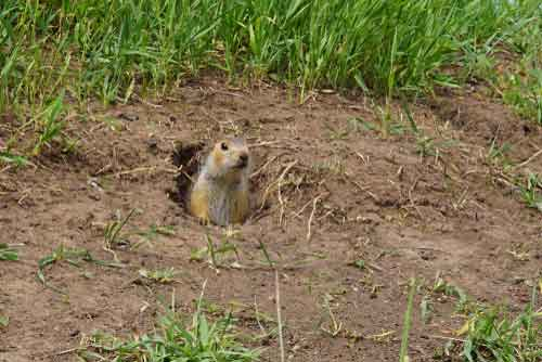 Gopher and Mole Control